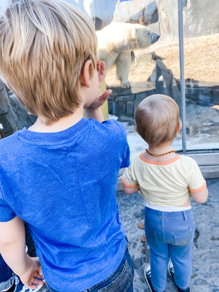 kids at the zoo looking a polar bear in spring weather | 1000 Hours Adventure - February Recap | IgniteNourishThrive.com